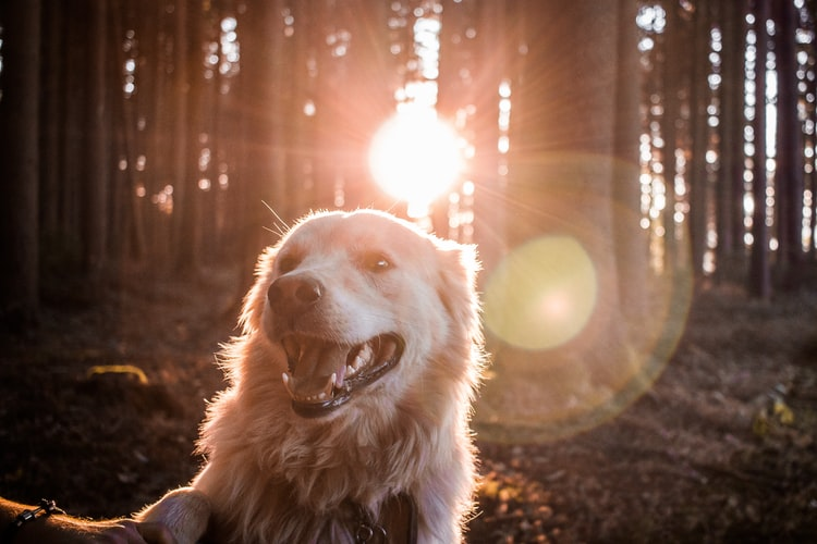 A dog in a forest in front of the sun rays